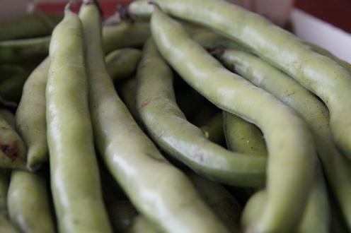 dicke, oder Saubohnen